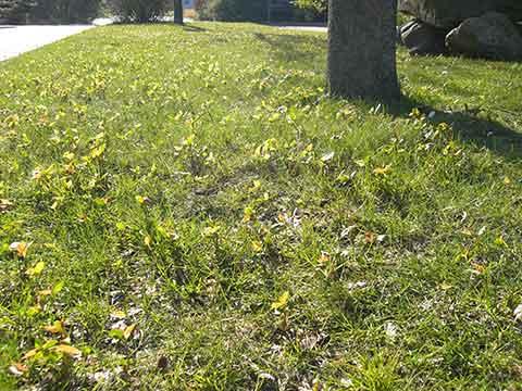 Rasenfläche in der Knolle